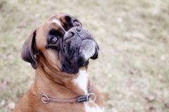 Hundeportrait-DSC08132-yvy-anheier-fotografie