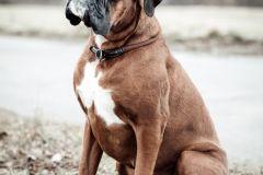 Hundeportrait-DSC08266-yvy-anheier-fotografie