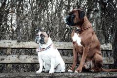 Hundeportrait-DSC08360-yvy-anheier-fotografie