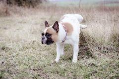 Hundeportrait-DSC08605-yvy-anheier-fotografie