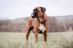 Hundeportrait-DSC08621-yvy-anheier-fotografie