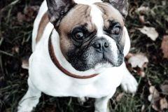 Hundeportrait-DSC08657-yvy-anheier-fotografie