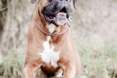 Hundeportrait-DSC08695-yvy-anheier-fotografie