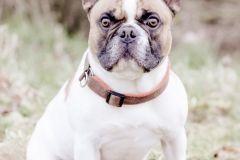 Hundeportrait-DSC08736-yvy-anheier-fotografie