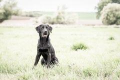 Hundeportrait_yvy-anheier-fotografie_1-2