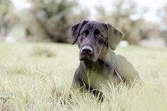 Hundeportrait_yvy-anheier-fotografie_1